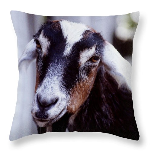 Animals Throw Pillow featuring the photograph Sugarplum by Jan Amiss Photography