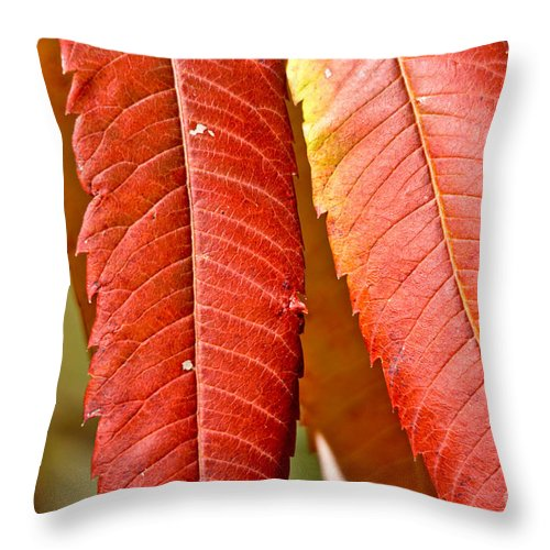 Throw Pillow featuring the photograph Sumac Leaves by Cheryl Baxter