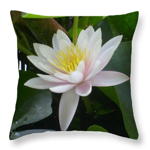 Water Lily Framed Print Throw Pillow featuring the photograph Summer Fun by Ann Willmore
