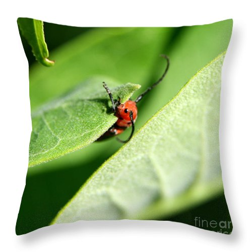 Insect Throw Pillow featuring the photograph Summer Snack by Neal Eslinger