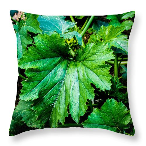 Squash Leaves Throw Pillow featuring the photograph Summer Squash Leaves by Sherman Perry