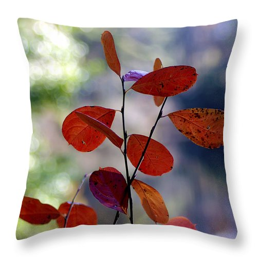 2d Throw Pillow featuring the photograph Summer's End by Brian Wallace