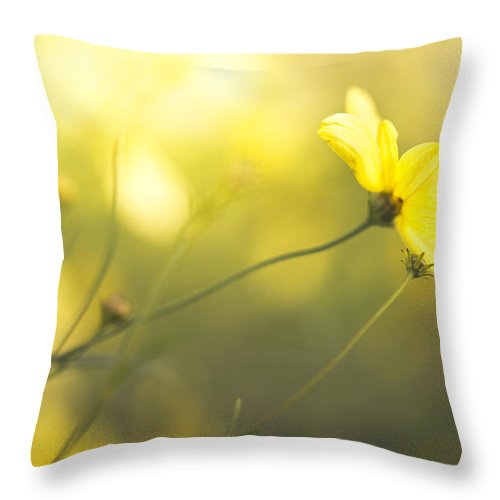 Flowers Throw Pillow featuring the photograph Summertime Warmth by Shane Holsclaw
