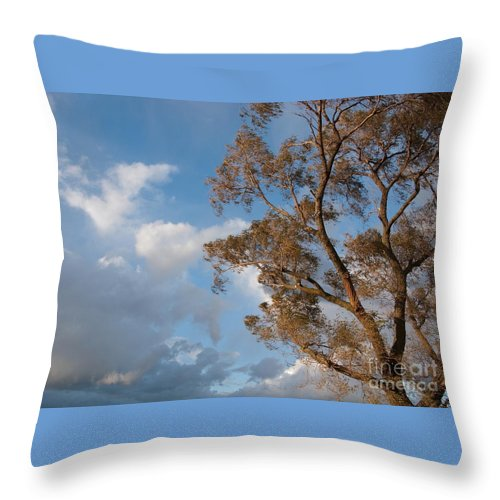 Tree Throw Pillow featuring the photograph Sun And Wind by Ann Horn