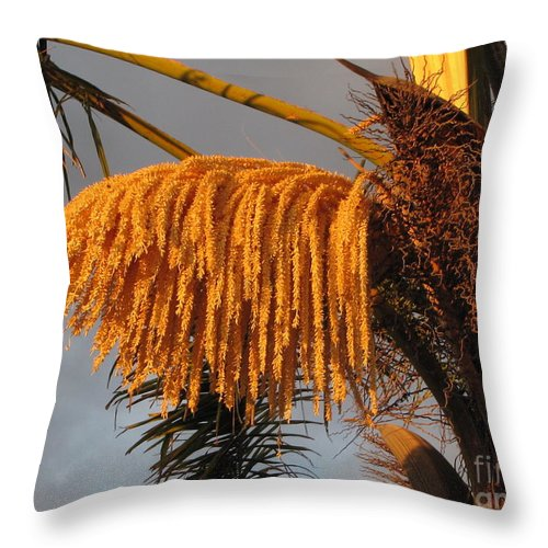 Palm Trees Throw Pillow featuring the photograph Sun Glowing Palm by Sheryl Young