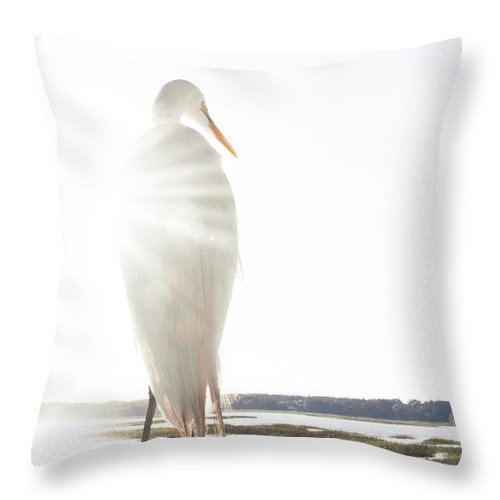 Standing Water Throw Pillow featuring the photograph Sun Perch by Copyright Dan Smith