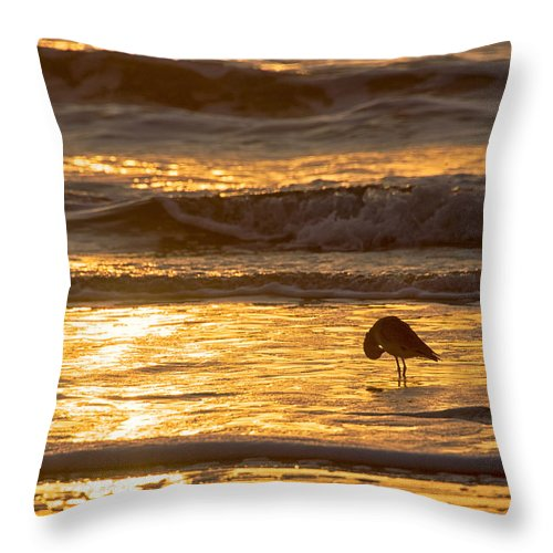 Bird Throw Pillow featuring the photograph Sun Salutation by Mary Lee Dereske