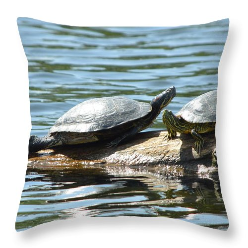 Stretching Throw Pillow featuring the photograph Sun Stretching Turtle And Youngster by Nicki Bennett