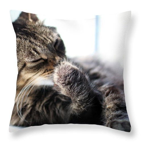 Cat Throw Pillow featuring the photograph Sunbathing by Todd Blanchard