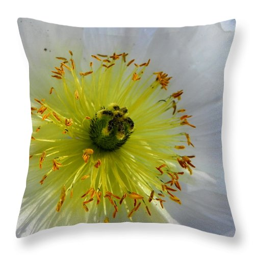 Flower Throw Pillow featuring the photograph Sunburst by Deb Halloran