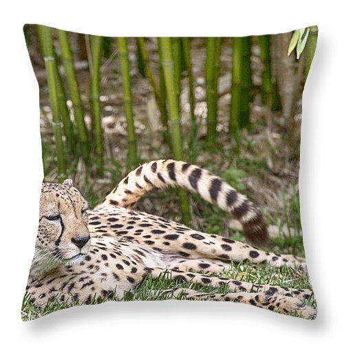 Cheetah Throw Pillow featuring the photograph Sunday Afternoon Lazing by Douglas Barnard