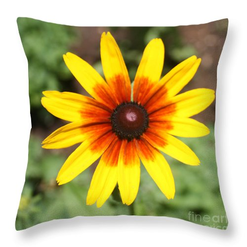 Sunflower At Full Bloom Throw Pillow featuring the photograph Sunflower At Full Bloom by John Telfer