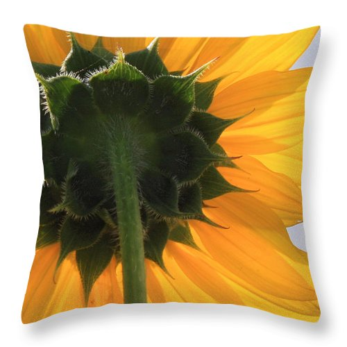 Yellow Throw Pillow featuring the photograph Sunflower Back by Valerie Loop