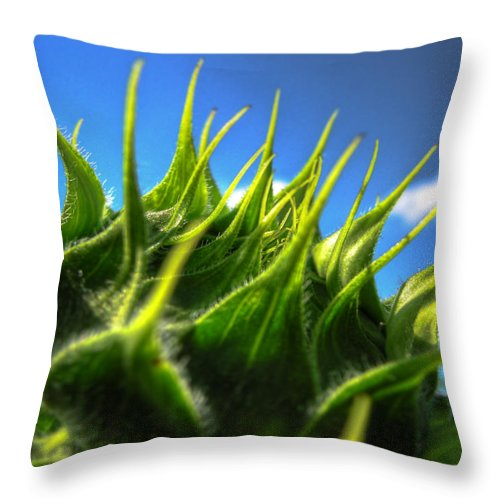 Sunflower Throw Pillow featuring the photograph Sunflower Bud Closeup Against Blue Sky by Vlad Baciu