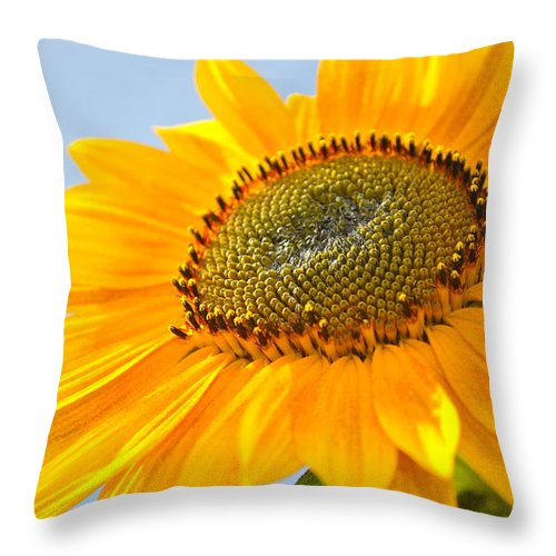 Sunflower Throw Pillow featuring the photograph Sunflower by Cathy Mahnke