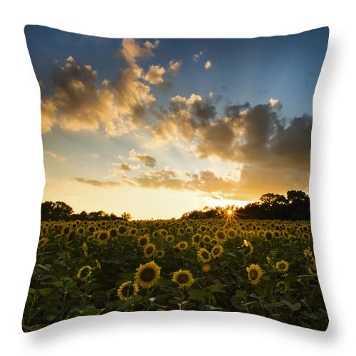 Flower Throw Pillow featuring the photograph Sunflower Field Sunset by Sharon M Connolly