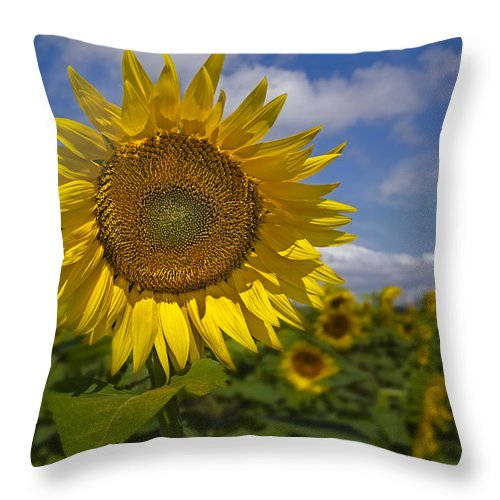 Petals Throw Pillow featuring the photograph Sunflower Field by Susan Candelario