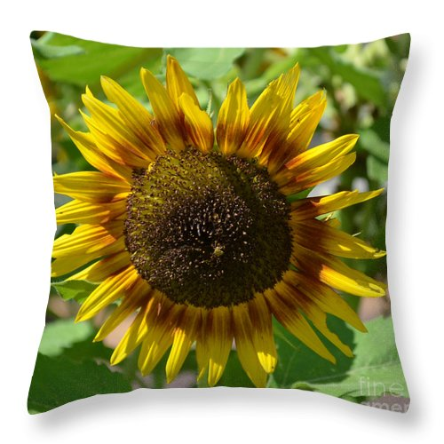Sunflower Glory Throw Pillow featuring the photograph Sunflower Glory by Luther Fine Art