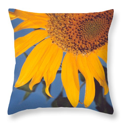 Flower Throw Pillow featuring the photograph Sunflower In The Corner by Heather Kirk