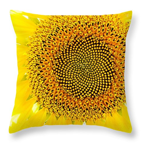 Sunflower Throw Pillow featuring the photograph Sunflower In The Summer Sun by Weston Westmoreland