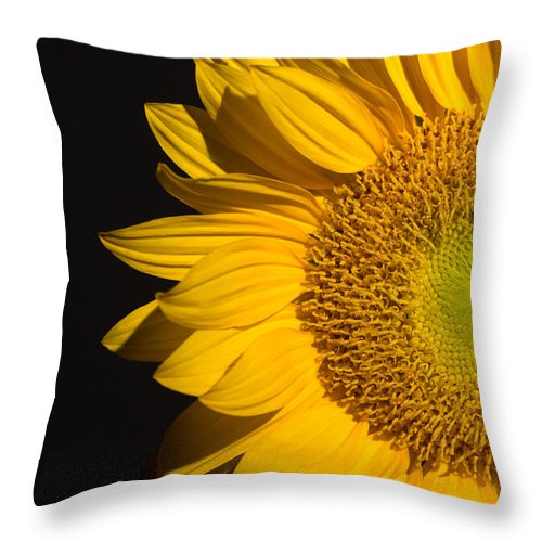 Sunflowers Throw Pillow featuring the photograph Sunflower by Mark Ashkenazi