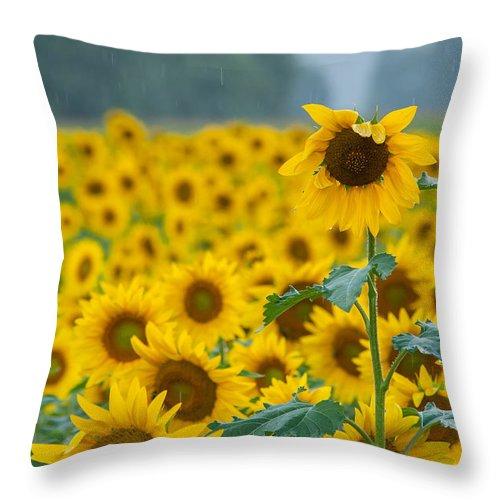 Sunflower Rain Sussex Nj Throw Pillow featuring the photograph Sunflower Rain Sussex Nj by Terry DeLuco
