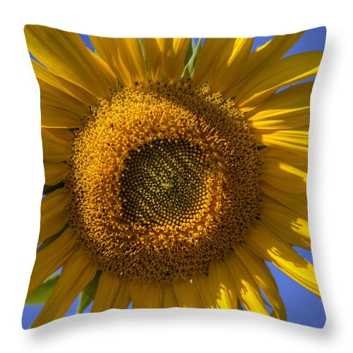 Sunflower Throw Pillow featuring the photograph Sunflower by Steve Gravano