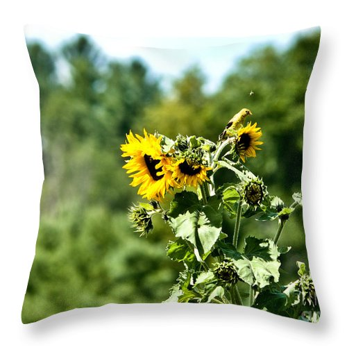 Sunflowers Throw Pillow featuring the photograph Sunflower Visitor by Cheryl Baxter