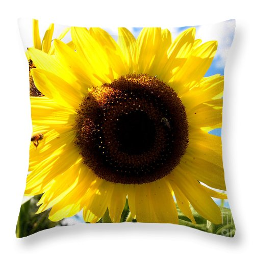 Sunflowers Throw Pillow featuring the photograph Sunflowers Feeding The Hive by Deborah Fay