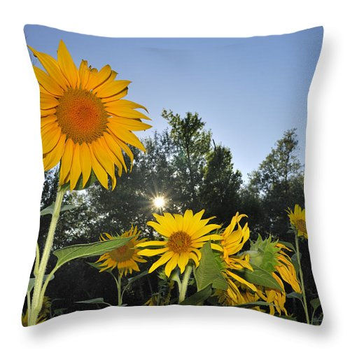 Sunflower Throw Pillow featuring the photograph Sunflowers by Guido Montanes Castillo