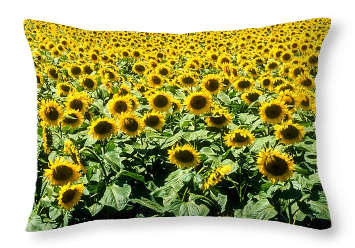 France Throw Pillow featuring the photograph Sunflowers by Matthew Pace