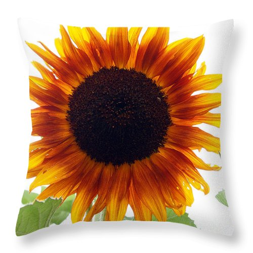 Sunflowers Throw Pillow featuring the photograph Sunflowers Petals Of Light by Deborah Fay