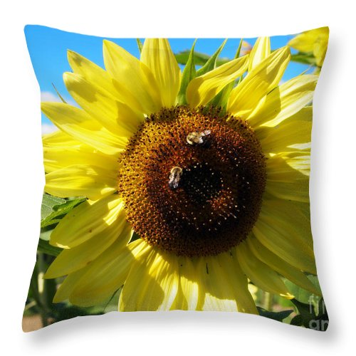 Sunflowers Photographs Throw Pillow featuring the photograph Sunflowers With Bees Harvesting Pollen by Deborah Fay