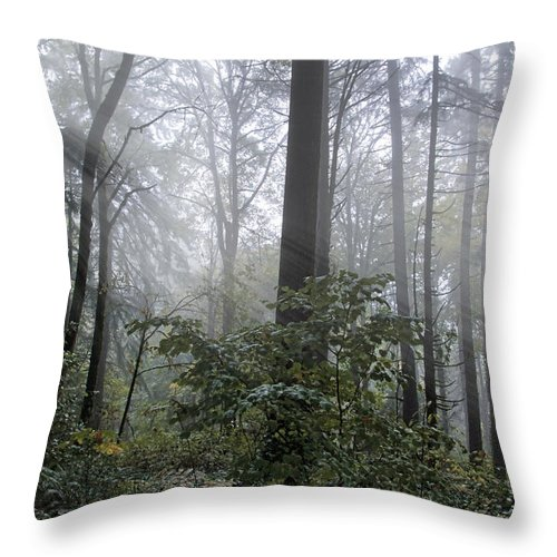 Sunlight And Fog Throw Pillow featuring the photograph Sunlight And Fog by Wes and Dotty Weber
