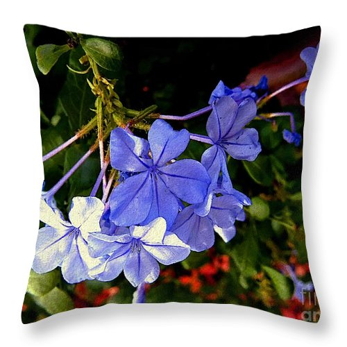 Garden Throw Pillow featuring the painting Sunlight On The Blues by RC DeWinter