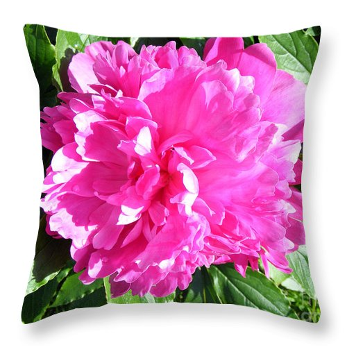 Pink Peony Throw Pillow featuring the photograph Sunlight On The Peony by Barbara Griffin