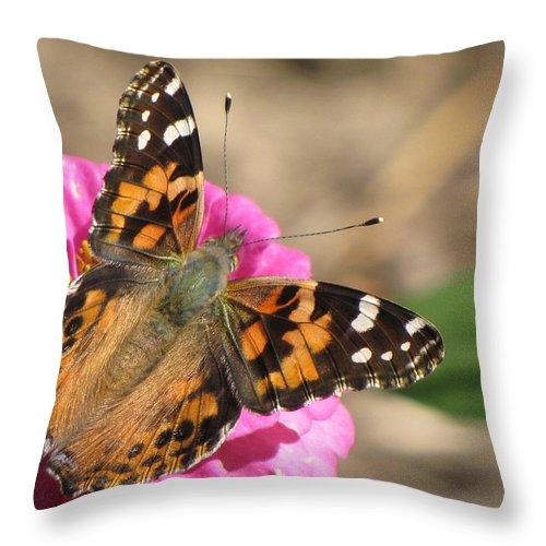 Butterfly Throw Pillow featuring the photograph Sunlight On Wings by Karen Beasley