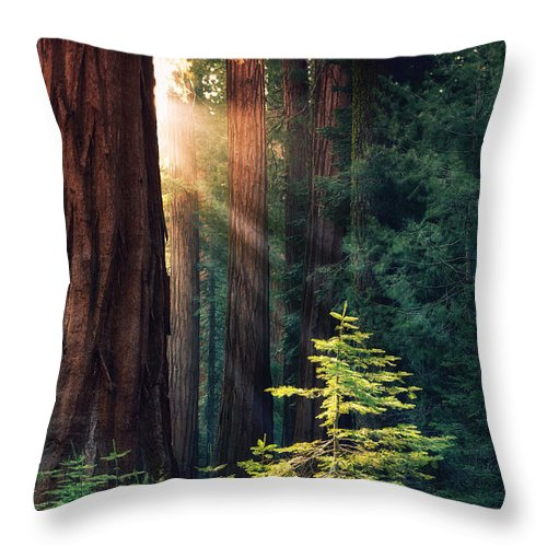 Redwood Throw Pillow featuring the photograph Sunlit From Heaven by Jane Rix