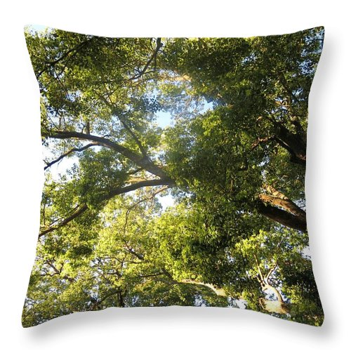 Tree Throw Pillow featuring the photograph Sunlit Tree Tops by Leanne Seymour