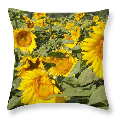 Yellow Throw Pillow featuring the photograph Sunning With Friends by William Norton