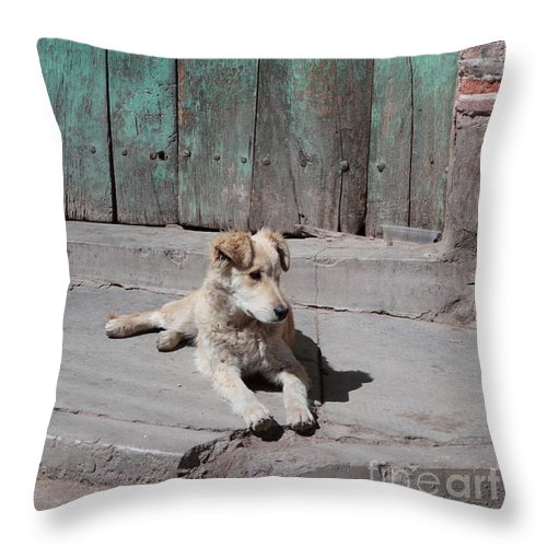 Dog Throw Pillow featuring the photograph Dog Enjoying A Sunny Doorstep by James Brunker