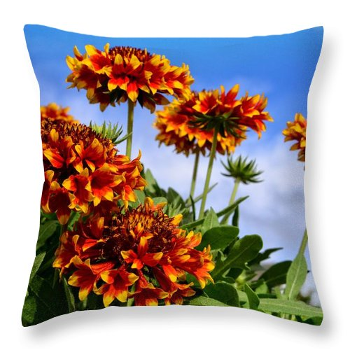 Wildflower Throw Pillow featuring the photograph Sunny Side Up by Lynn Bauer
