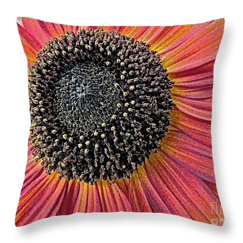 Bright Flower Throw Pillow featuring the photograph Sunny Summer Sunflower by Miss Dawn
