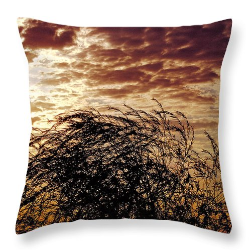 Nature Throw Pillow featuring the photograph Sunrise And Lacy Tree by Thomas Firak