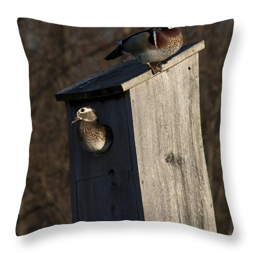 Wood Throw Pillow featuring the photograph Sunrise Woodies by Roger Bailey