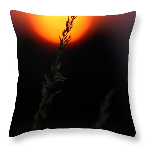 Summer Throw Pillow featuring the photograph Sunset Seed Silhouette by Jeremy Hayden