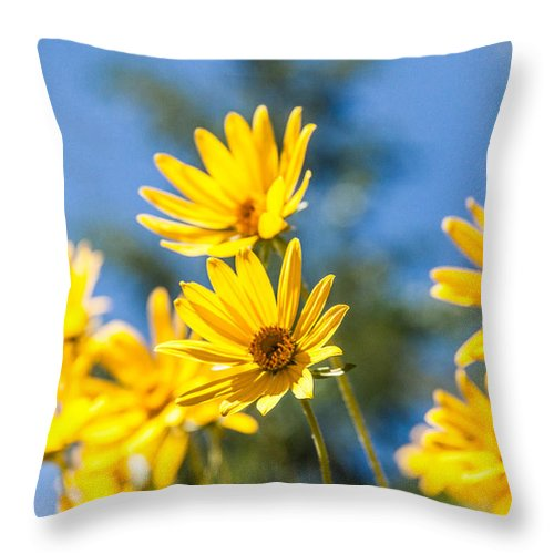 Flowers Throw Pillow featuring the photograph Sunshine by Chad Dutson