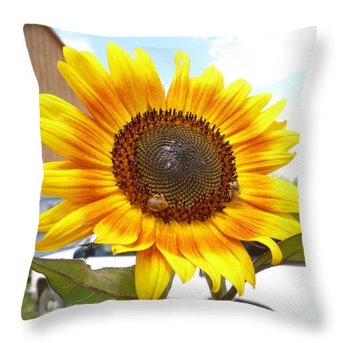 Sunny Throw Pillow featuring the photograph Sunshine In Country Farm by Lingfai Leung