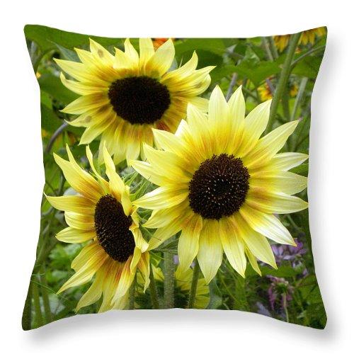 Sunflower Throw Pillow featuring the photograph Sunshine Trio by Brigitte Mueller