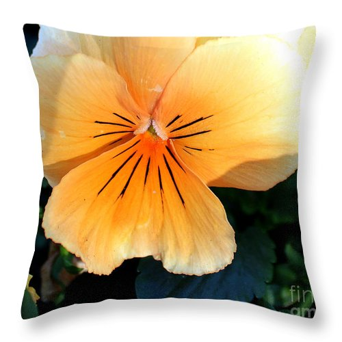 Pansy Throw Pillow featuring the photograph Sunshine Yellow Pansy by Arizona Lowe
